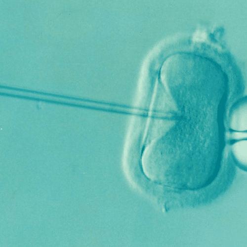 premiers-ovules-humains-developpes-in-vitro-parvenus-a-maturite