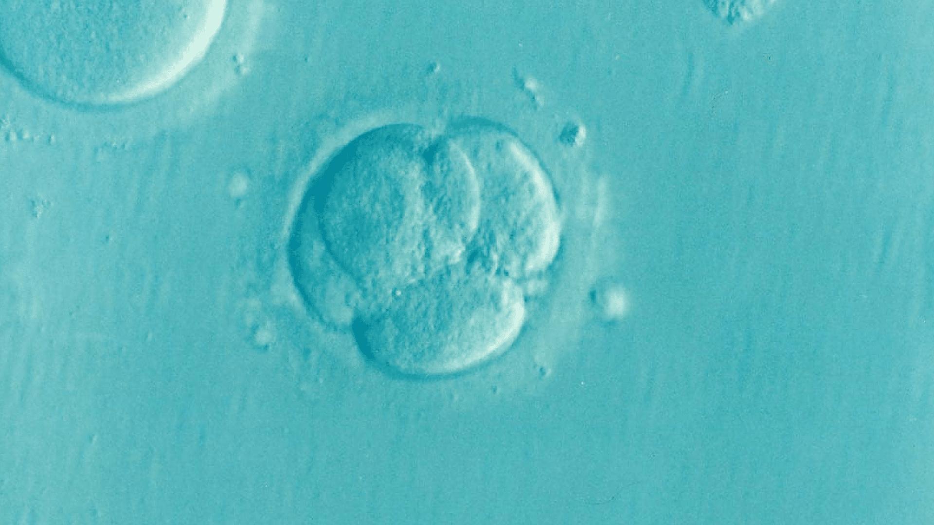 FIV : même taux de réussite qu'on utilise des embryons frais ou congelés